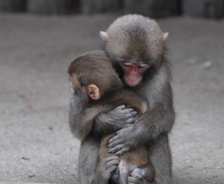 Awaji Island Monkey Center – Friendly Wild Monkeys 🐵 | Discover Kansai